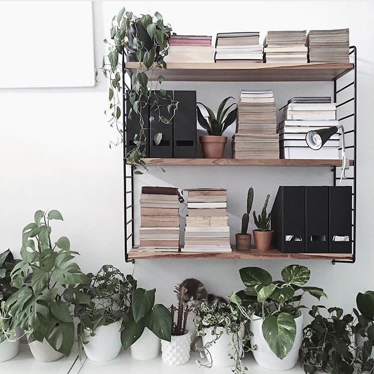 trepen shelf